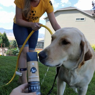 Ways to show your dog extra love with Rufus and Coco