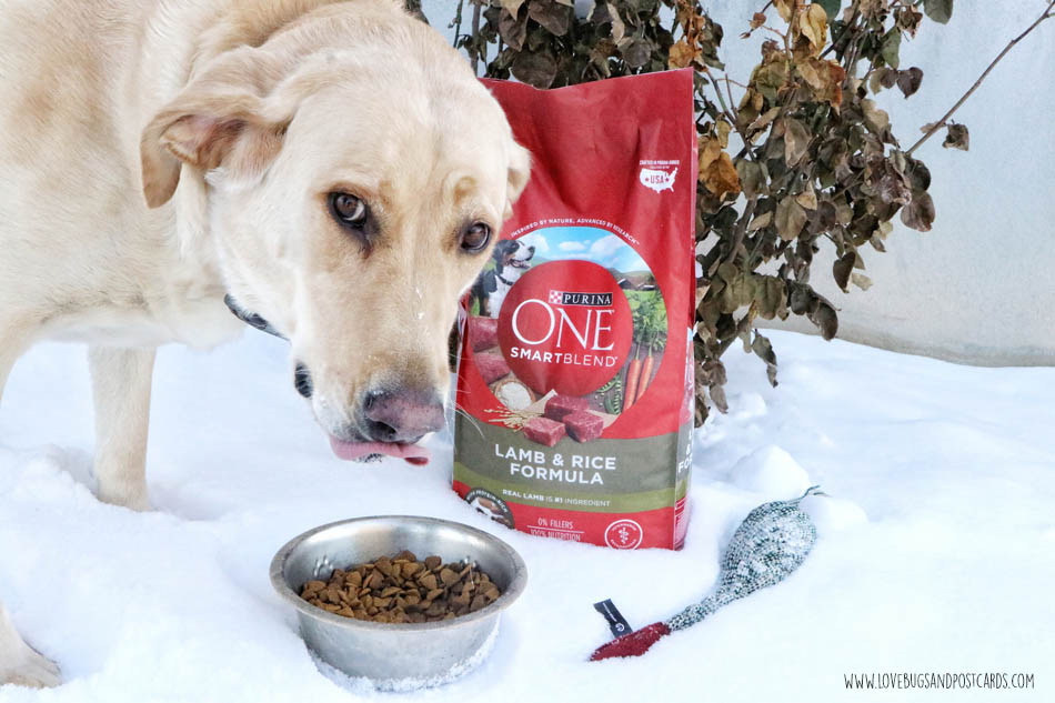 Purina ONE 28-Day Challenge with Jake