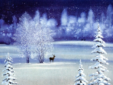 Stag In Snow Christmas Card Set
