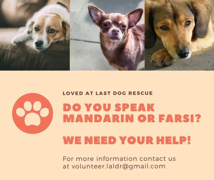 Mandarin Farsi Volunteer