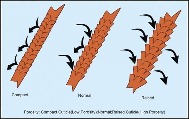 hair-porosity-explained