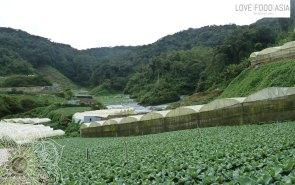 Erdbeerfelder rund im Tanah Rata