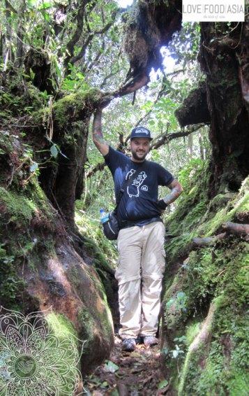 Ich mitten im Dschungel