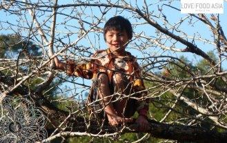 Ein Lausbub im Baum