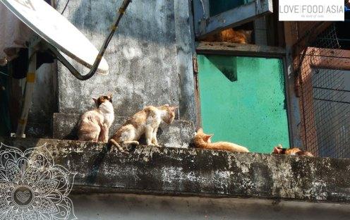 Katzen in Rangun