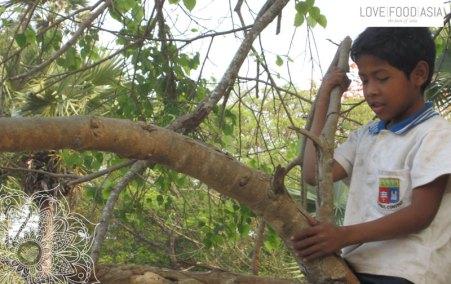 Boy playing on a tree at Angkor Wat