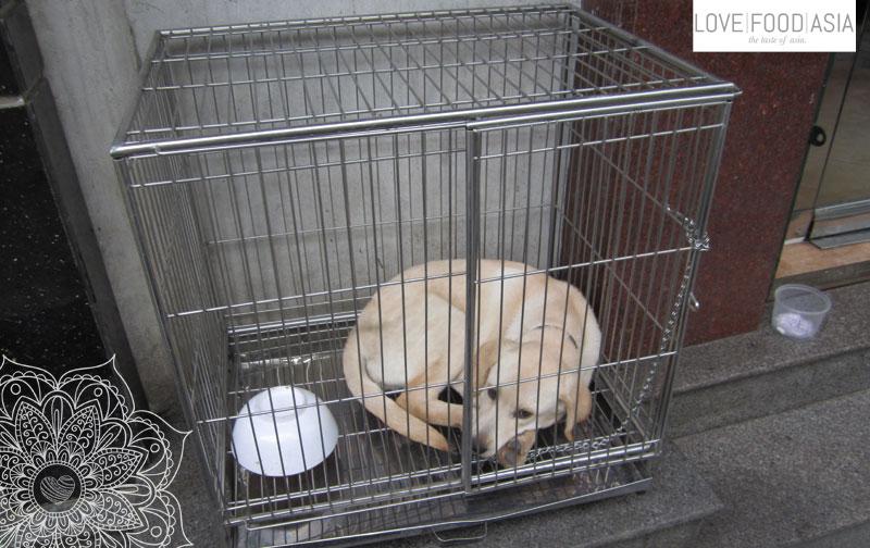Hanoi dogs