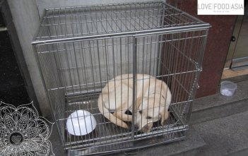 A dog in a cage in Hanoi