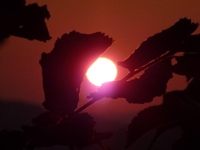 sunset-976660_960_720