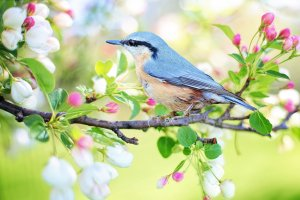 spring well being tips