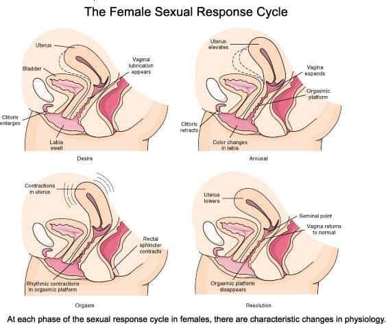 aroused vagina
