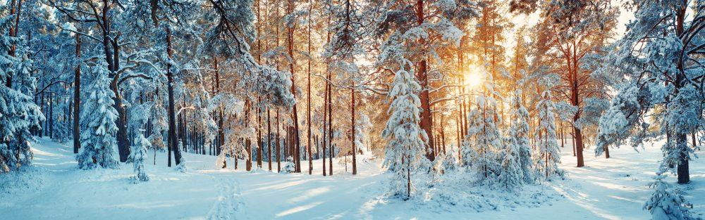 Champagner Picknick im Schnee - we love winter time!