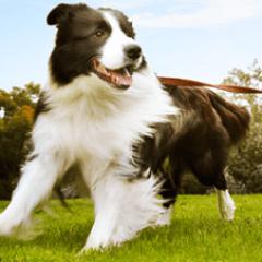 rspca-dog