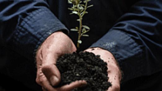 cn nursery seedling sq