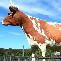 the big cow sq