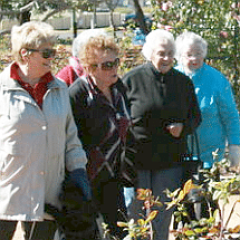 rose garden group