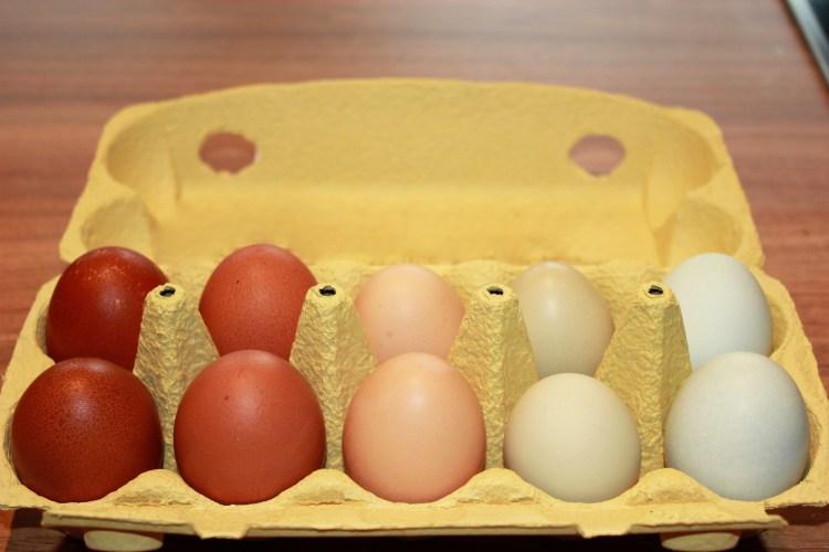 Unser erstes Marans-Ei