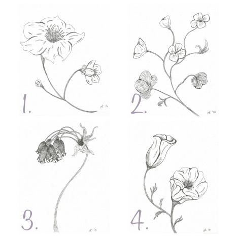 flower sketch mini gallery free printables lovely weeds