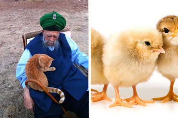 SheikhNazimKS_URS-chicksaliveagainw