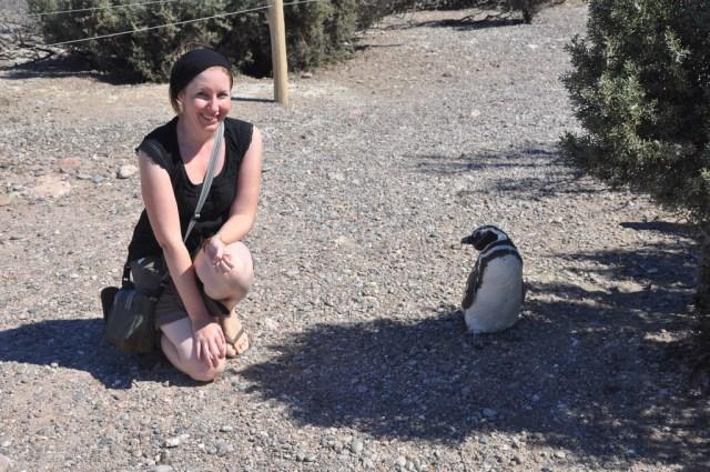 Punta Tombo Argentina Magellanic Penguins