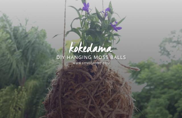 DIY Moss Ball