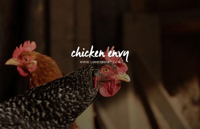 Chicken Envy - renting + chickens