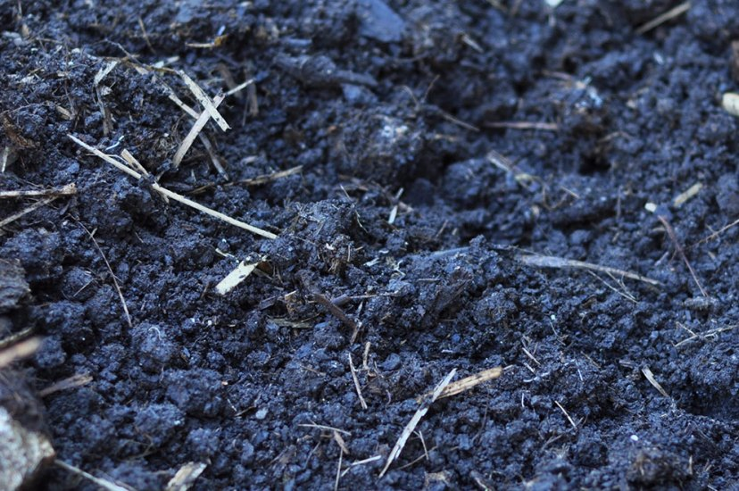 Ingredients to boost your veggie patch soil