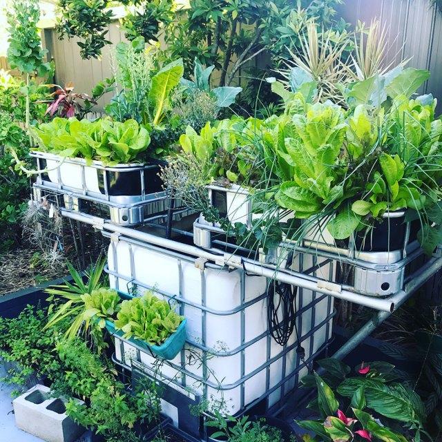 Spring Garden Update Aquaponics System