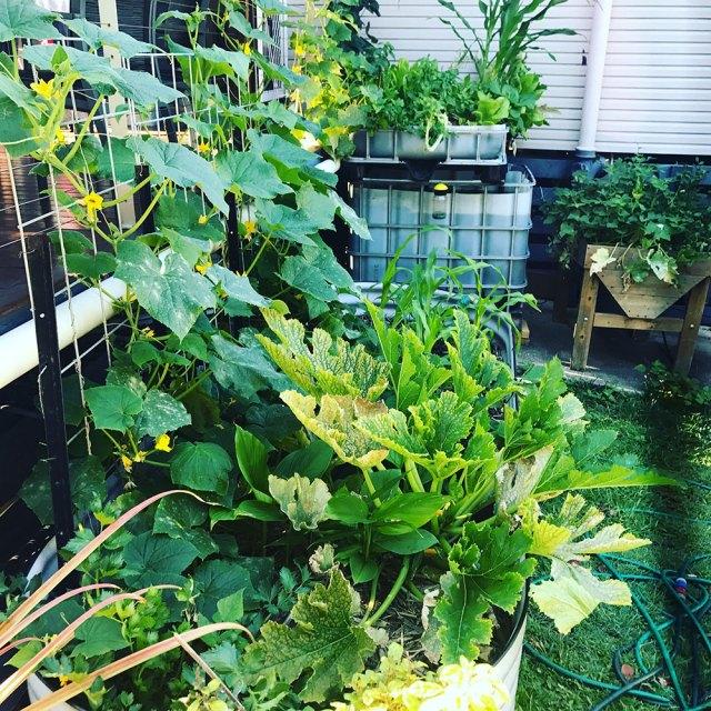 Spring Garden Update Back Garden