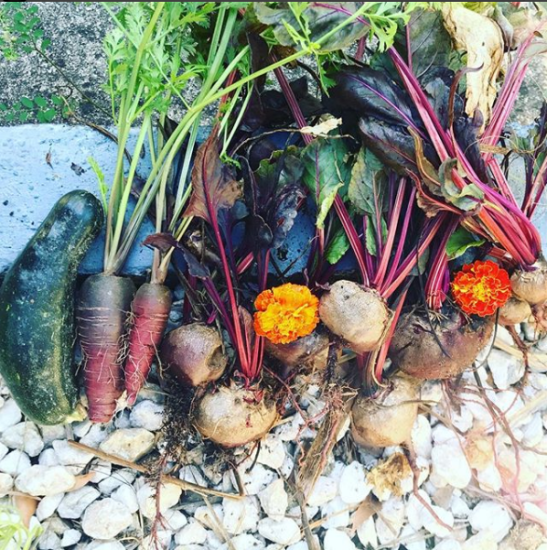 Ugly vegetable harvest