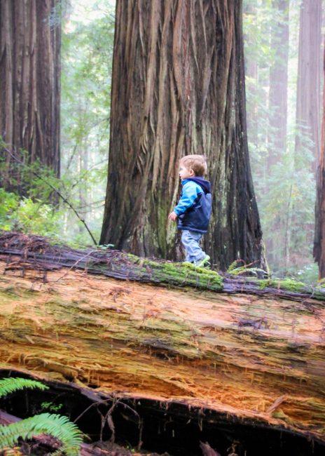 The Rockefeller Loop in Southern Humboldt County Redwoods