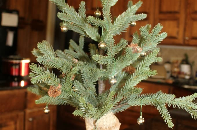 Decorating plants for Christmas, Unconventional ways to decorate for Christmas