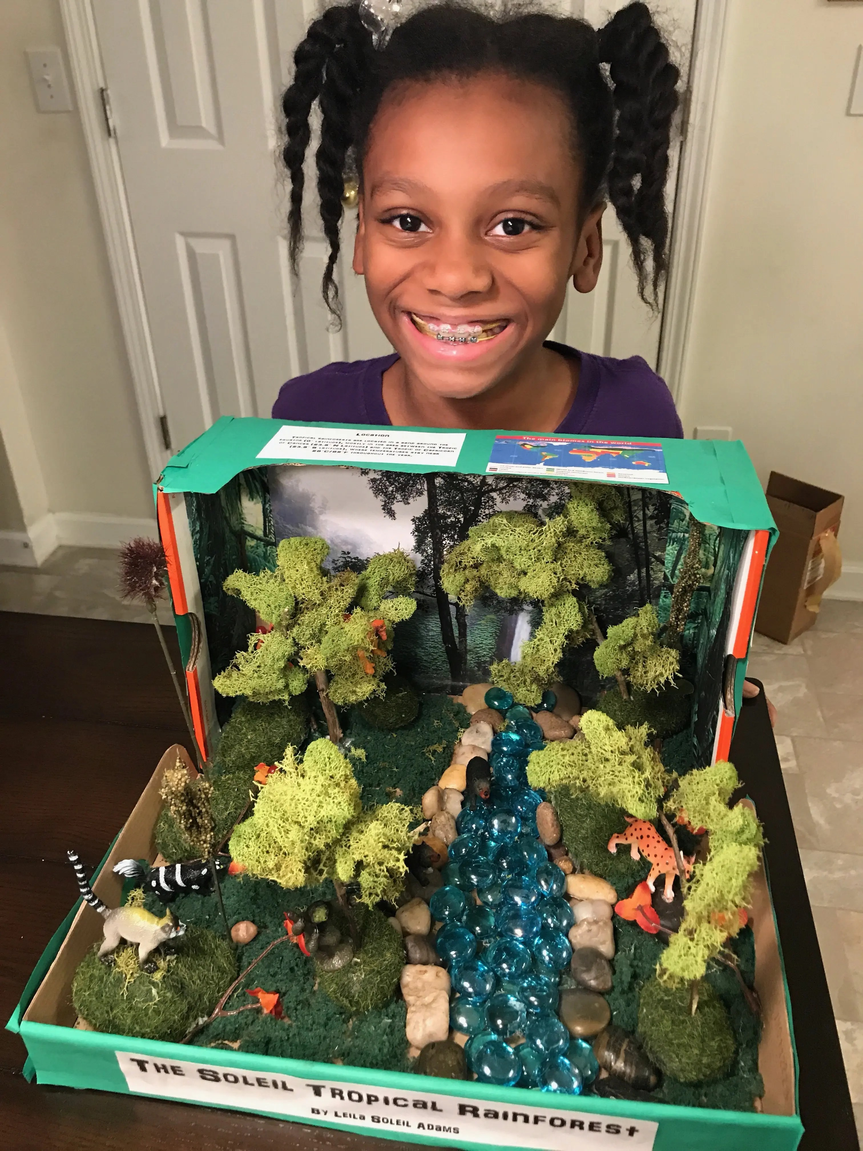 How To Make A Tropical Rainforest Diorama For Under 20