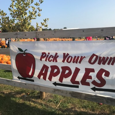 Mad About Plaid + Apple Picking at Tougas Farm