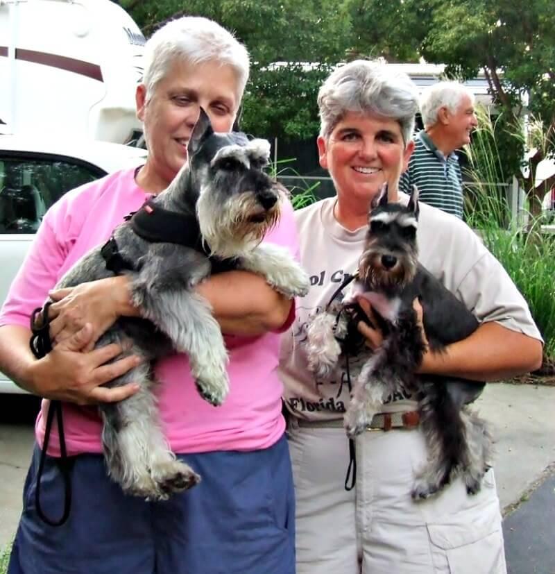 Reberstein's Miniature Schnauzer Puppies