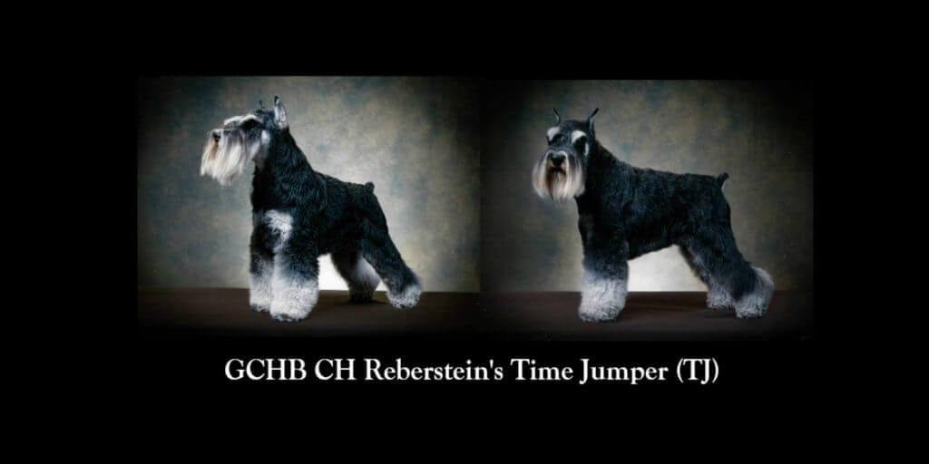 GCHB CH Rebersteins Time Jumper Final