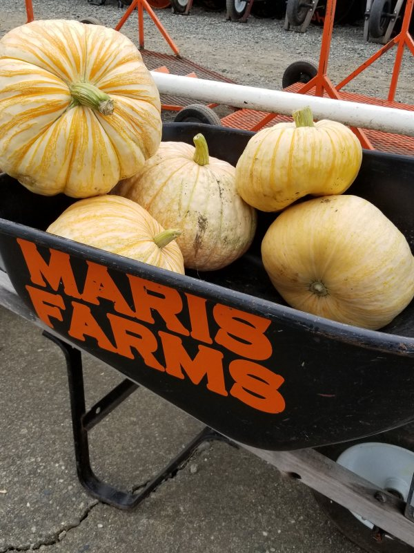 Visit Maris Farms in Buckley for all your fall fun!