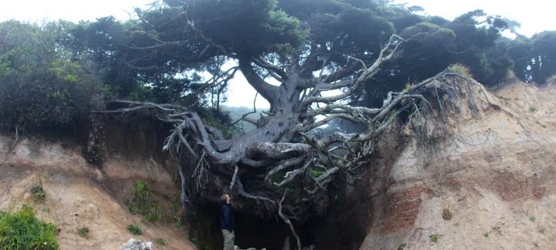 Tree root cave, hiking, tree, trees