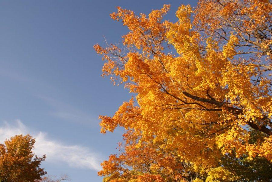 fall, hiking in fall