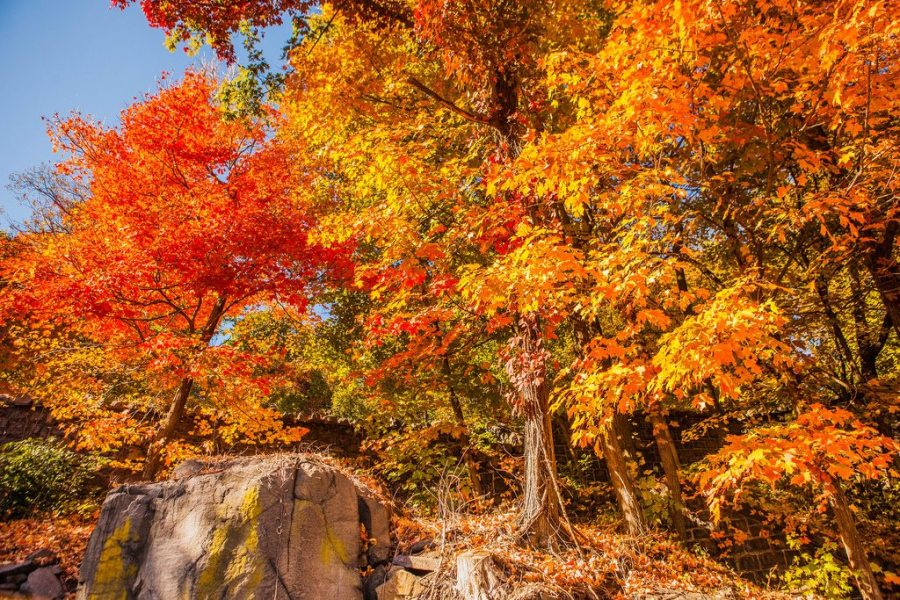 hikes, fall hikes, fall foliage, backcountry, autumn