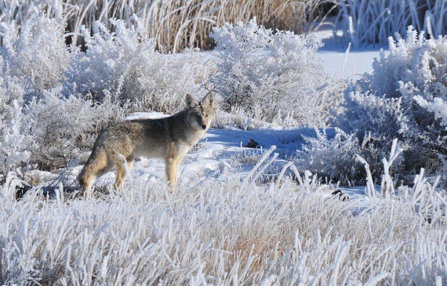 wildlife hikes in Colorado, wildlife viewing, wildlife, Colorado, trails, wildlife hikes colorado