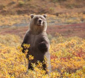 Avoid-wildlife-habitat