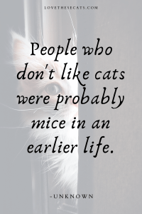 Read more about the article Quotes about Cats