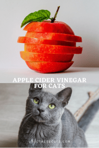 Read more about the article 5 Benefits of Apple Cider Vinegar for Cats