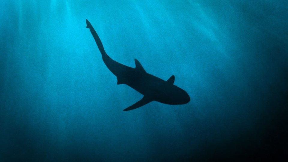 Shark Island. Truk lagoon in Micronesia