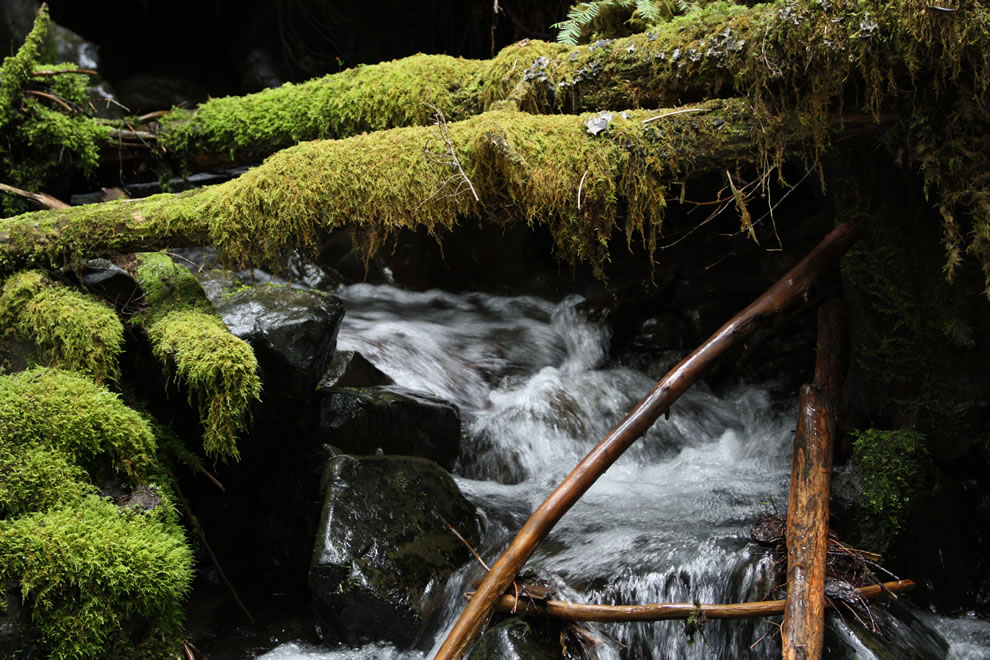 Coarse woody debris in Olympic National Park mountain stream