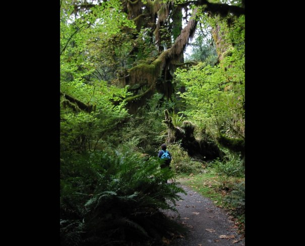 Spruce Nature Trail about 0.1 km from the Hoh Rain Forest Visitor Center