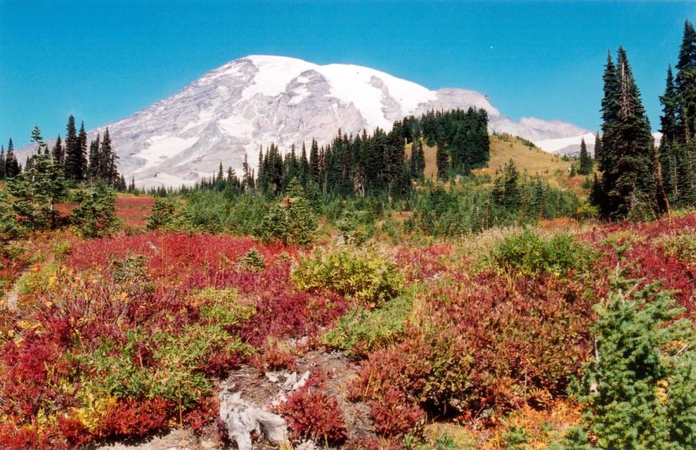 Autumn view of Mount Rainier from Paradise