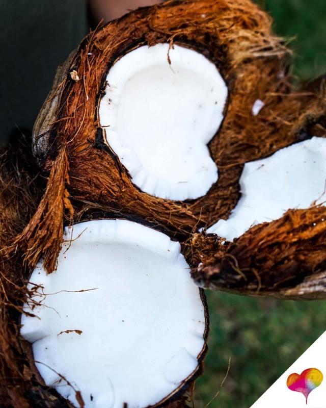Kokosöl gesund