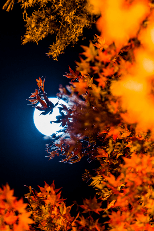 Image result for autumn moon